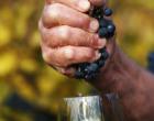 Los vinos naturales